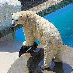 ☆大人気☆白クマが待ってるよ♪【男鹿水族館GAO】入場引換券付プラン
