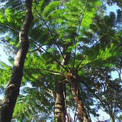 奄美の大自然を堪能★マングローブの森と金作原プチトレッキング【2泊3日4食付】