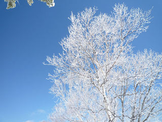 【2月★連休連泊】スキー・スノボを思いっきり楽しもう★早めの夕食17:50〜中日清掃なしでお得★