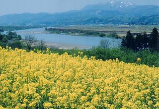 【お手頃価格】春の山菜あったか天ぷらと 季節の和菓子プラン