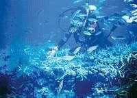 ◆実は関西穴場ダイビングスポット!?◆夏の海の幸懐石&日本海ダイビング☆チョイスプラン