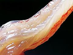 【100%ブランド活番ガニ1杯使用★柴山松葉蟹】極上 2・0杯使用蟹フルコース