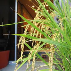 【期間限定】呑み比べセット&南蒲米の新米のお土産付♪収穫の秋を和食&イタリアンのコラボで堪能!