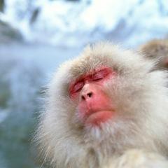 ◆冬の風物詩 地獄谷野猿公苑への送迎付き!◆【温泉大好きプラン!】