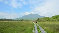 【5/22限定】◆春の大収穫祭◆山菜狩り体験ツアーで春を楽しむ♪※山菜狩りは翌日23日実施