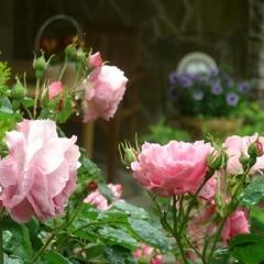 ★5月〜6月バラが咲き誇るガーデンへ★きらめくローズに魅せられて♪フレンチ×泡ワインのマリアージュ♪