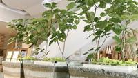 【楽天限定★旅行応援】広めのお部屋(34㎡)にアップグレード!温泉&朝食付