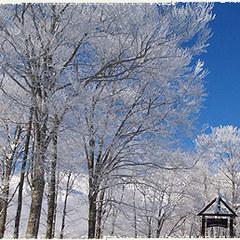 【春スキー★朝食のみ★リフト1日券】白馬岩岳スノーフィールド目の前!一泊朝食春スキーリフト券付パック