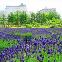 【新緑特別】5月・6月限定! 緑翠の猪苗代・裏磐梯をお楽しみ下さい♪ 1泊2食付きプラン