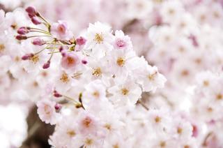【期間限定!】フォレストリゾートの「春」を味わう!!【お得なご宴会ご宿泊プラン!!】