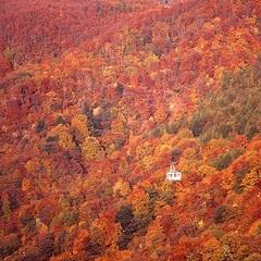【紅葉&秋の味覚バイキング】早期予約がお得!紅葉にぶどう狩りも♪楽しい秋の山形へ