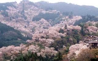 【春得】【朝食付】♪♪〜さくらの国のさくらの名所〜吉野山〜春爛漫さくらプラン♪♪【お土産付】【春得】