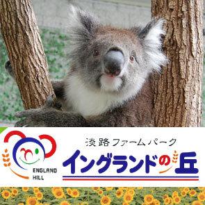 【素泊】【イングランドの丘チケット付】コアラに会える♪淡路島で遊び満喫プラン