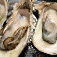姉妹店シーアイガで夕食「牡蠣食べ放題」プラン!
