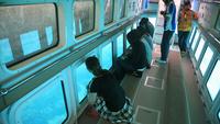 【本部で遊ぼう!元気村チョイス】イルカが暮らす元気村で体験メニュー♪ランチ付<2泊〜>