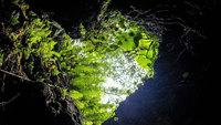 【うるま感動キャンペーン】沖縄の鍾乳洞CAVE OKINAWA入場券<飲茶ディナー・2食付>