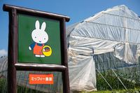 【GW特集】「農園クッキング」付・1泊2食自然体験プラン【お子様歓迎】