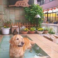 ペットと一緒に気ままな素泊まりプラン