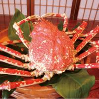 ■5大グルメプラン■高足蟹を様々な調理法で。アカザエビ・伊勢海老・鮑・みかわ牛を使用!