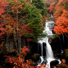 【秋得プラン】お一人様最大2000円割引!秋めく日光に出かけよう♪創作和食と2種の温泉を楽しむ秋日和