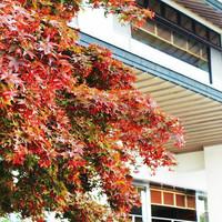 【秋の味覚】<バイキング>のぐち北湯沢ファームのスープ付き♪2020年秋から新スタイルバイキング