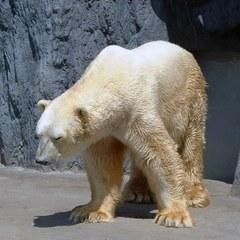 親子で層雲峡と動物園を満喫♪【旭山動物園入園券&ゆったり和洋室確約】バイキングプラン
