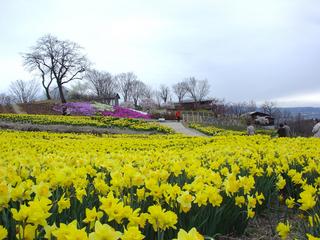 平日限定! 女性3人で巡る信州春の花巡り