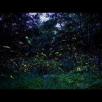 【特典付き】6月限定!ホタルを見よう♪自然界に触れる一時を楽しもう!