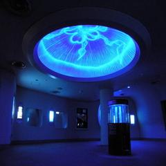 【新江ノ島水族館入館券付き】圧巻の大水槽/イルカショーや人気のクラゲも♪【カップル/ファミリー】