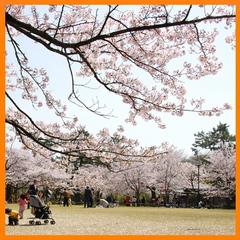 春のファミリープラン 「特典満載」(朝食付き)【添い寝無料】【楽天限定】【直前割】