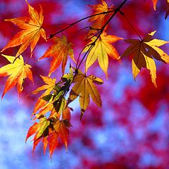 秋の大収穫祭★紅葉・秋の味覚を満喫♪紅葉眺める空中散歩が人気の「ドラゴンドラ」まで車で30分!