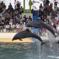 【春休み】ファミリー♪松島水族館のチケット付きプラン♪
