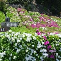 【季節のお花をプレゼント♪】いい花プラン 〜花に囲まれた瀬戸内東予へ〜 夕食は瀬戸内水軍バイキング