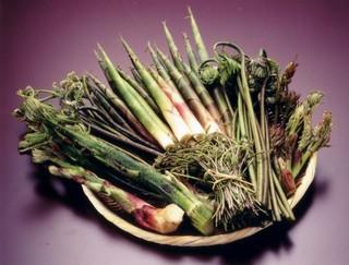 南魚沼の自然!山菜採り&新緑満喫プラン