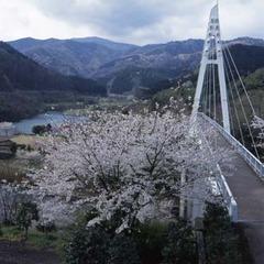イベント応援プラン☆春爛漫!花いっぱいの伊東温泉を満喫