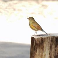 野鳥の楽園「戸隠」バードウォッチングプラン(1泊2食付) 【生物観察】【体験】