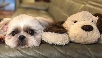 【ポイント5倍・わんちゃん同伴プラン】小型犬限定★看板犬スピアとルイもお出迎え♪