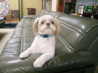【小型犬限定】看板犬スピアとルイもお出迎え 家族も嬉しいわんちゃんも一緒にお泊りプラン