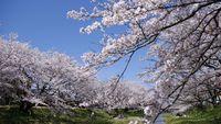【春を先取り】早期特典ワンドリンク付き○桜咲く春の玉造温泉へ♪春は各地でお花見満喫♪のどぐろ月照会席