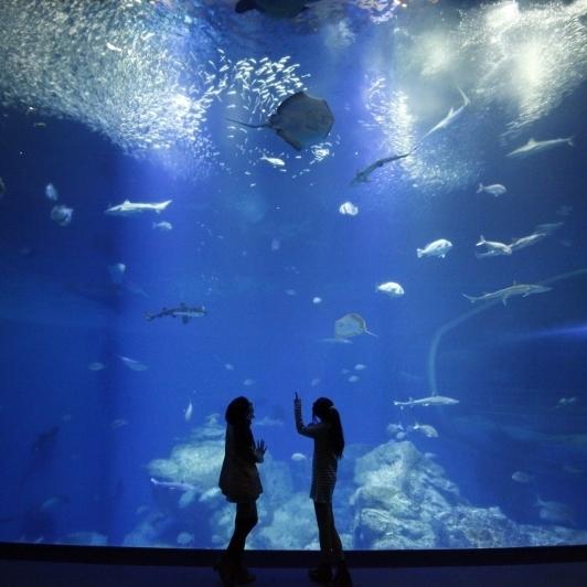 ★アクアワールド大洗水族館チケット付きバイキングプラン★観光スポットは巨大水族館で決まり!