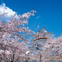 桜満開!【貸切風呂付!】お花見桜まつりプラン1泊2食付き