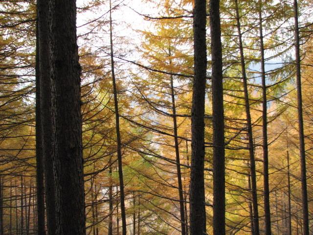 ペンションマドンナ 関連画像 4枚目 楽天トラベル提供