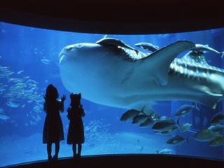 【休日はファミリー・カップルで☆】世界最大のジンベイザメを見に行こう♪海遊館宿泊プラン♪