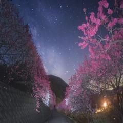 【春得】桜と花桃ゆったり散策春得信州の味覚満喫プラン