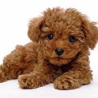 ワンちゃん無料♪愛犬も一緒に旅行を満喫♪≪予約前の電話確認必須≫2室限定