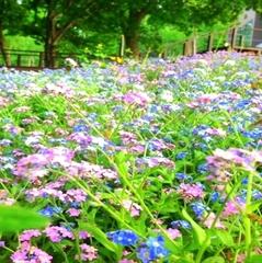 【二人だけのお花見】花びら舞う静かなプライベートガーデンで大切な人とお花見を〜桜スイーツも愉しみに