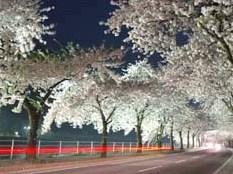 【素泊り】 スプリングフェア♪カップルプラン 【めぐみの湯有】【春得】 春の山形へどうぞお越し下さい