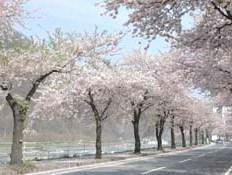 【こだわりの朝食付】 スプリングフェア♪カップルプラン 【めぐみの湯有】【春得】 春の山形へどうぞ