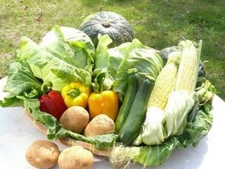 お土産に地元農家の収穫野菜付き <夕朝食付き>