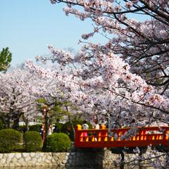 【海鮮鍋・季節の天婦羅・季節の茶碗蒸し】季節感あふれる三重の恵み「花会席」《3月〜5月》